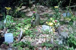 炭鉱で命を落とした朝鮮人の墓標。一つひとつに花が捧げられている(日向墓地)