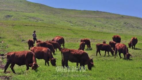 草原でのびのびと育つ愛国牛
