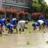 長野初中で田植え、日本市民と生徒たちが「学校米」作り