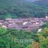 〈朝鮮仏教と私たち 54〉近代・曹溪宗の成立