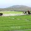 朝鮮の農業、昨年の実績と今年の課題