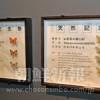 〈朝大・朝鮮自然博物館 10〉昆虫・チョウ目中心に約300種