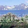 〈朝鮮名峰への旅 3〉山腹登るキバナシャクナゲ、天池湖畔で花は最高潮に