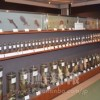 〈朝大・朝鮮自然博物館 8〉魚類・自慢の大同江魚類コレクション