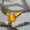 〈朝大・朝鮮自然博物館 6〉鳥類・臨津江渡る統一の象徴も