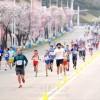 第29回万景台賞国際マラソン/国内外のランナーで盛況