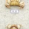 〈ようこそ!朝大・朝鮮自然ミュージアム 73〉アリアケガニ