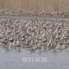 文徳・羅先渡り鳥保護区がラムサール条約に加入