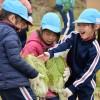 農業を楽しく学ぶ/名古屋初級で白菜の収穫体験