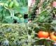 60の優良作物品種を育種/国家農作物品種に登録