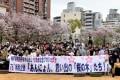 「共生の桜」を後世へ/神戸初中で創立75周年記念プロジェクト