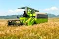 小麦、麦の収穫が進捗/黄海南道の協同農場で