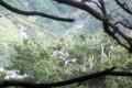 3千羽のシラサギ、アオサギを観察/平安南道と咸鏡北道の渡り鳥保護区で