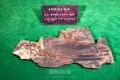 白土鳥化石が天然記念物に登録/1億3千万年前の鳥の化石