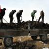 〈경제부흥구상의 결실을 4〉미곡협동농장, 지력 높이는 겨울철 농사차비