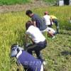 조선에 쌀 보내는 활동, 오사까 니시오사까에서 조일우호벼가을