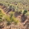 산림조성에 필요한 나무모생산/높은 목표를 내건 중앙양묘장