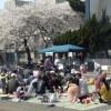 조일 참가자 120명으로 흥성거려/니이가따 태양절경축 꽃놀이