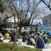 태양절 경축하는 조일우호꽃놀이/니이가다에서