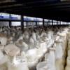 우리 나라 버섯생산을 힘있게 추동/국내 최대규모의 공장 본격가동