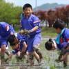 나가노초중 학생들, 일조시민단체 성원들과 함께 모내기
