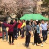 250여명의 동포들로 성황리에 진행/《태양절경축 고베지부 동포꽃놀이2019》