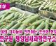 【동영상】〈자력갱생의 기치높이 전진하는 조선의 현장들 5〉농업연구원 평양남새과학연구소에서