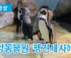 【동영상】중앙동물원 펭긴새사에서