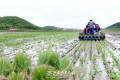 〈정면돌파전의 현장에서 4〉평양시 락랑구역 송남협동농장/과학농법 받아들여 《좋은 결실》전망