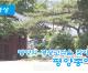 【동영상】〈평양의 명승고적을 찾아서 8〉평양종에서