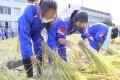 안받침속에 존재하는 배움의 자리/나가노초중학생들이 가을걷이와 탈곡작업