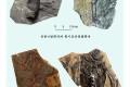 1억 3,000만년전의 새화석 발굴/신의주시 백토동지구에서