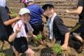 모종을 심어 풍작을 기원/이바라기초중고 초중급부 학생들이 모내기체험