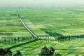 전국적으로 모내기가 적기에 질적으로 결속/《알곡생산목표점령의 담보 마련》