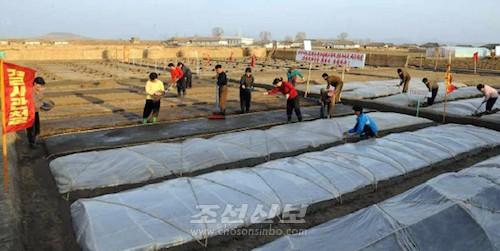 서해안의 농촌에서의 벼모판씨뿌리기풍경(로동신문)