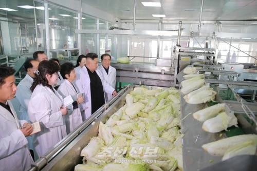 김정은원수님께서 조선김치공장의 본보기, 표준으로 전변된 류경김치공장을 현지지도하시였다.(조선중앙통신)